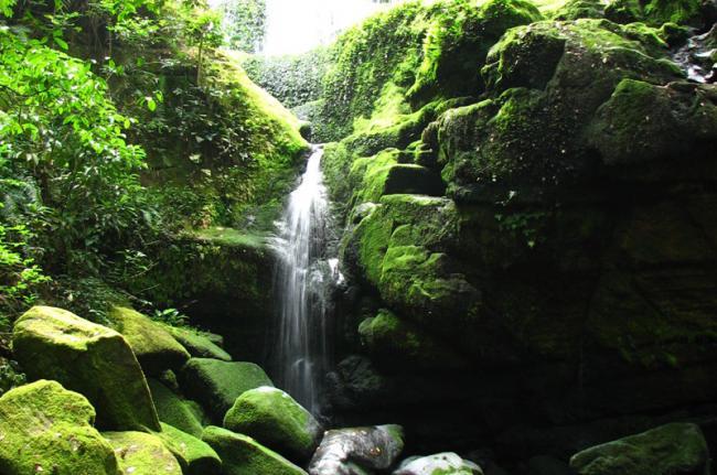 Parque Nacional Ivindo, Gabón