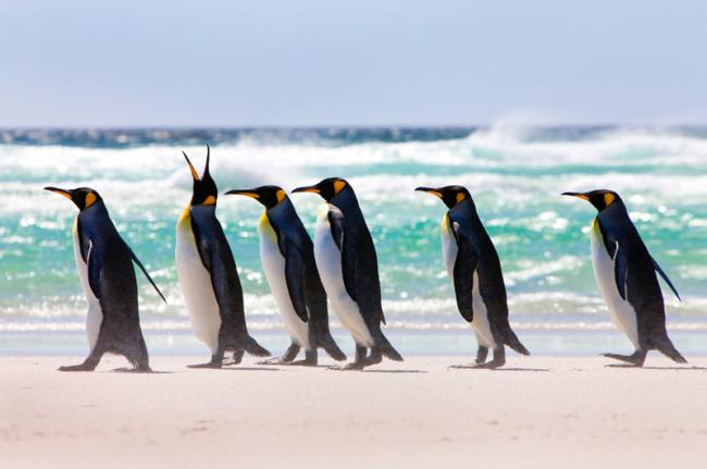 Volunteer Beach, Islas Malvinas