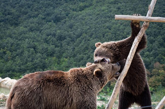 Reserva de osos, cerca de Pristina, Kosovo