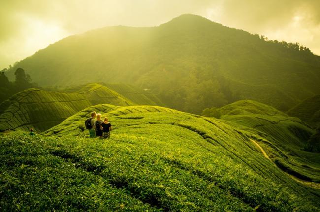 Cameron Highlands, Malasia