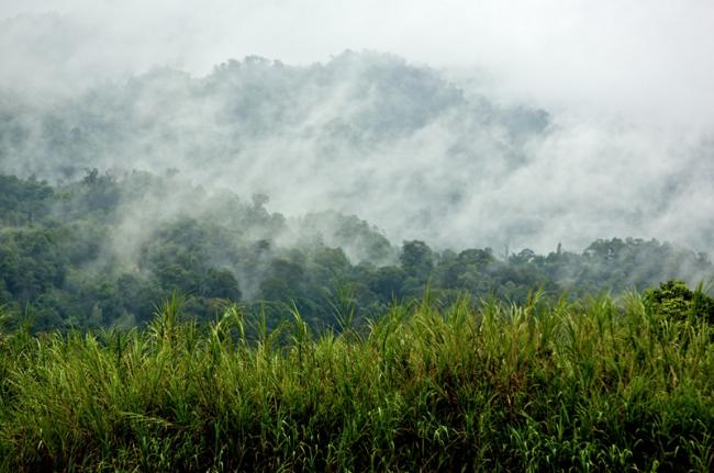 Gunung Mulu National Park, Kelabit Highlands, Borneo, Malasia