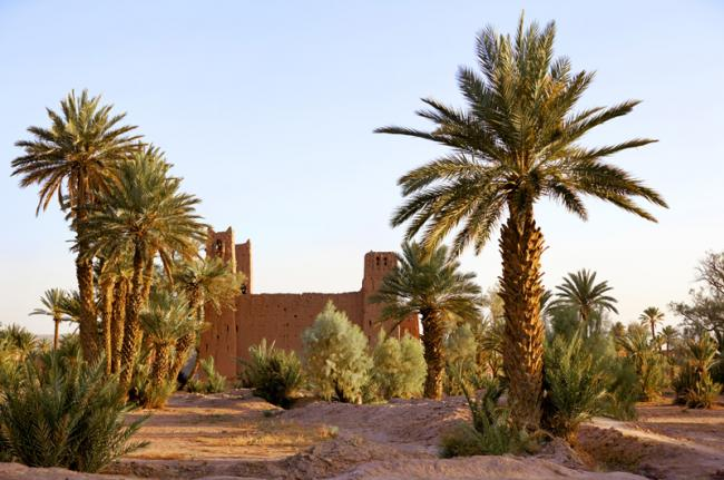 Palmeral de Skura, Marruecos