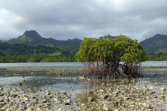 Isla de Kosrae, Micronesia