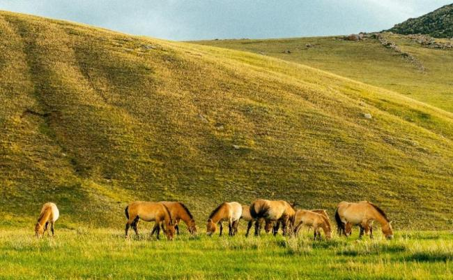 Parque Nacional de Hustai, Mongolia.