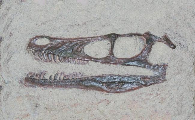Velociraptors silbadores