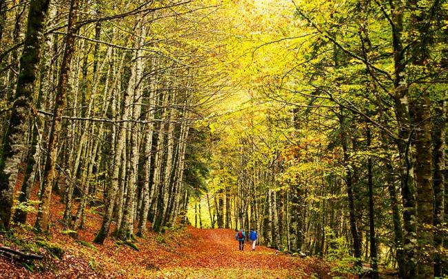 Selva de Irarti, Navarra, España