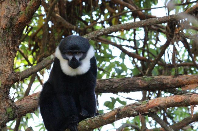Parque Nacional de Nyungwe