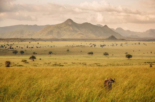Parque Nacional Valle del Kidepo, Uganda