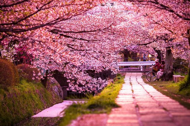 Sendero de la Filosofía (Tetsugaku-no-Michi), Kioto, Japón